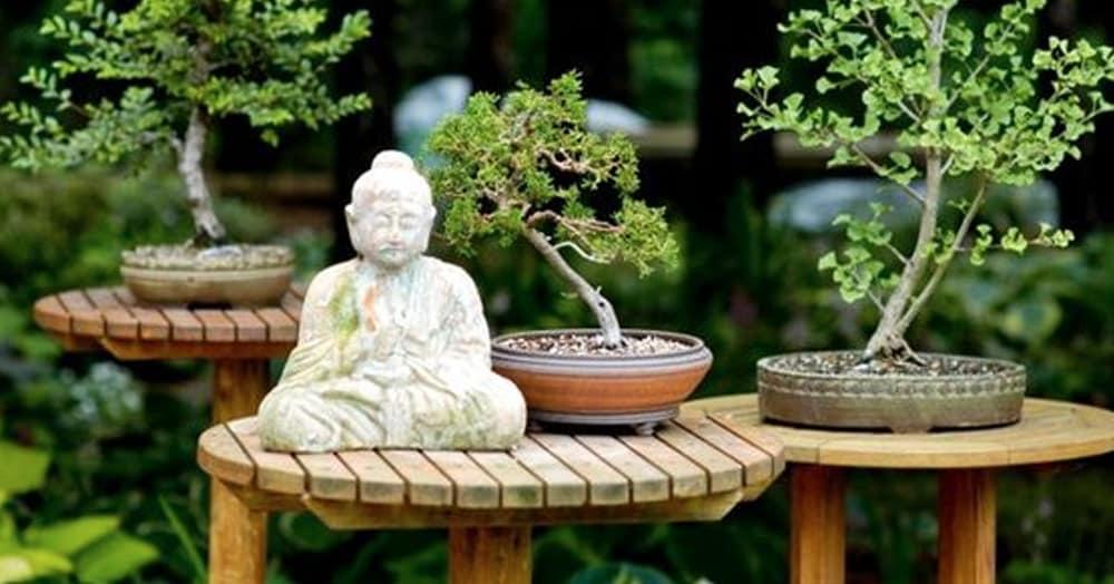 Annual Member Garden Tour And Picnic Minnesota Bonsai Society